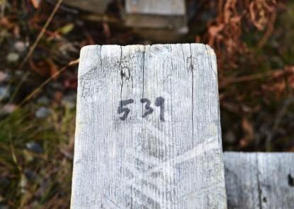 539 steps total