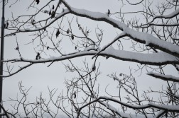 winter-148