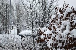winter-172