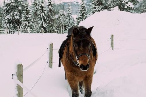 häst 002