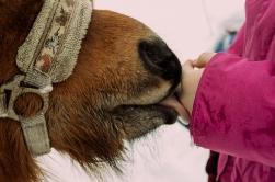 häst 032