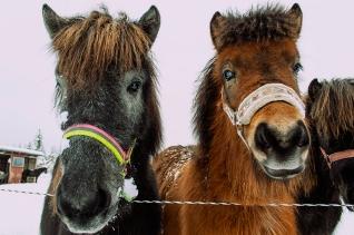häst 047