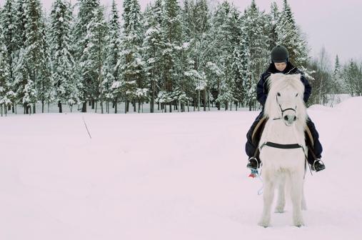 häst 062