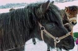 häst 076