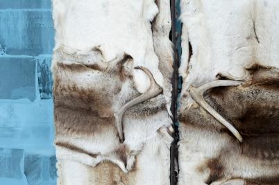 Reindeer covered door